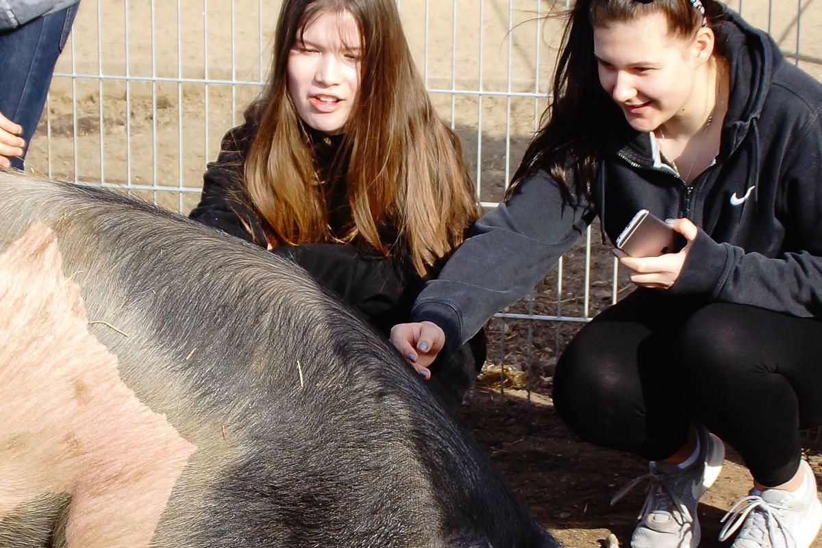 Biohof Hubicek Führung Schweine 10