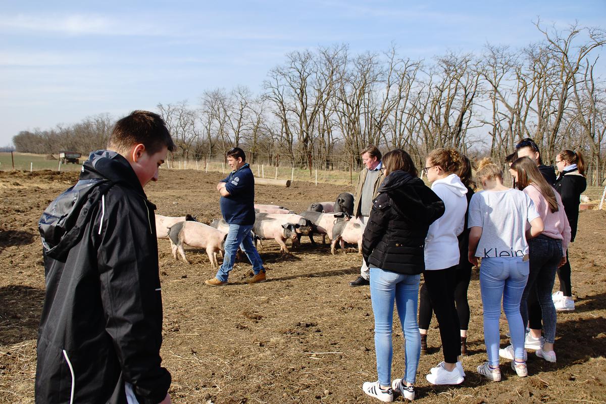 Biohof Hubicek Führung Schweine 15